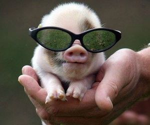 pig, cute, and piglet image