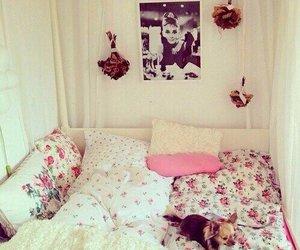 room, dog, and pink image