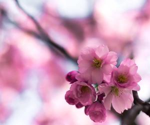 beautiful, cherry blossom, and Dream image