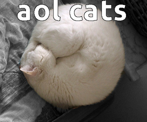 lolcats, meow, and cat meme image