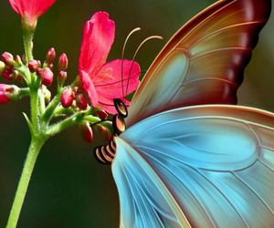 butterfly, flower, and wallpapers image