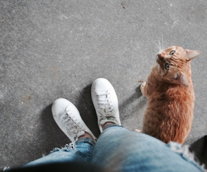 adidas, cat, and chat image