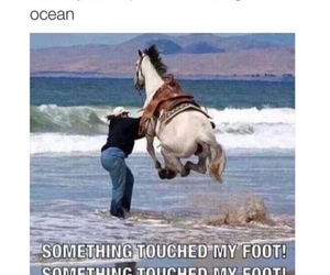 funny, horse, and ocean image