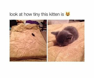 kitten, cat, and funny image