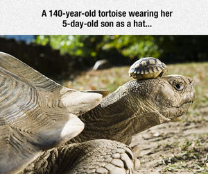 family and turtles image