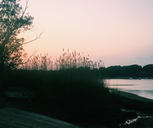 beach, cattails, and sunset image