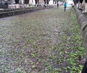 morelia calzada lluvia image