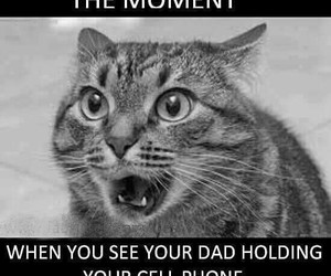 cat, funny, and dad image