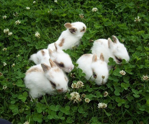 bambi, bunnies, and pale image