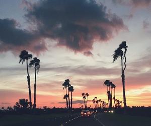 palms, sky, and trip image