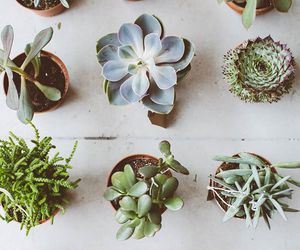 flora and succulents image