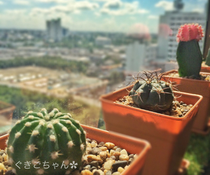 cactus, cactuslover, and cactusthailand image
