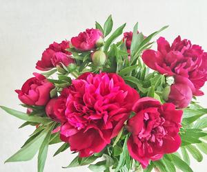 beauty, flowers, and like image