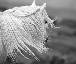 beauty, freedom, and horse image