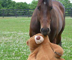 horse and bear image