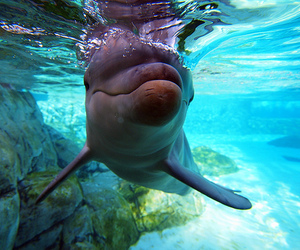 beautiful, dolphin, and ocean image