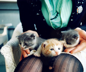 animal, cat, and kittens image