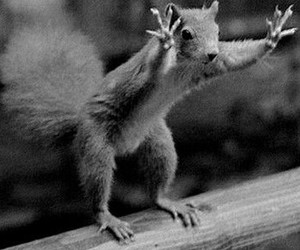 funny, animal, and nuts image