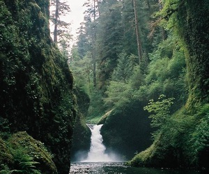 nature, forest, and waterfall image