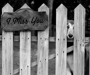 black and white, i miss you, and wallpapers4u image