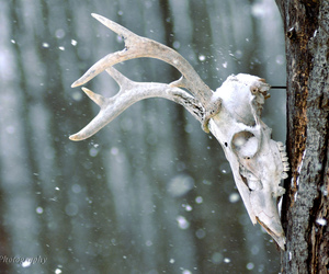 deer and skull image