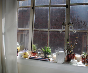 plants, window, and indie image