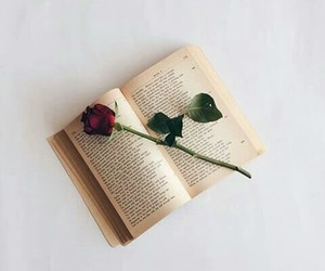 beautiful, book, and love image