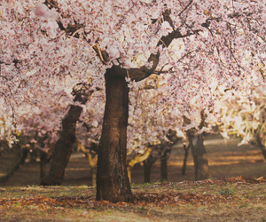 madrid, almond tree, and spring image