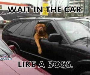 funny, like a boss, and dog image