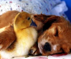 dog, puppy, and duck image