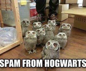 hogwarts, harry potter, and owl image