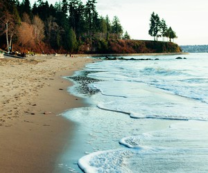beach, sea, and nature image