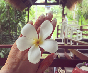 flower, holiday, and nails image