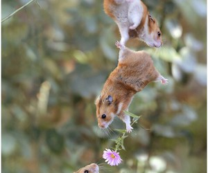 animal, flowers, and hamster image