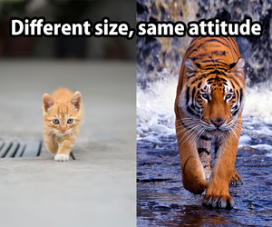 tiger, cat, and attitude image