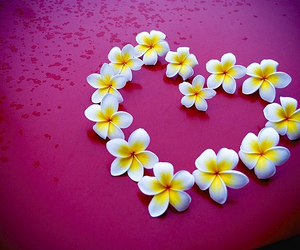 heart, flowers, and plumeria image
