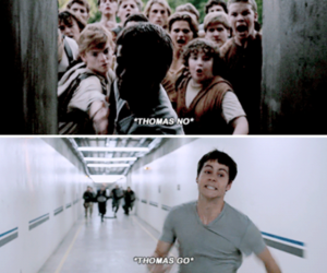 thomas, movie, and the maze runner image