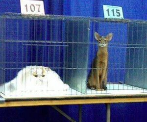 107, cage, and cats image