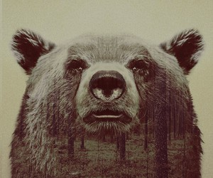 bear, animal, and forest image