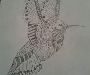 bird, disegno, and draw image