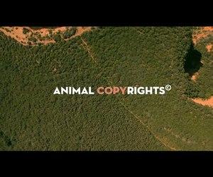 animal, photography, and WWF image