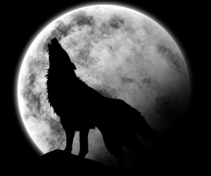 nuit and wolf image