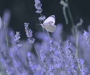 butterfly, flowers, and wallpapers image
