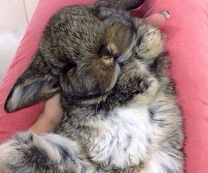 adorable, animal, and sleep image