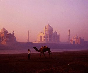 camel, india, and beautiful image
