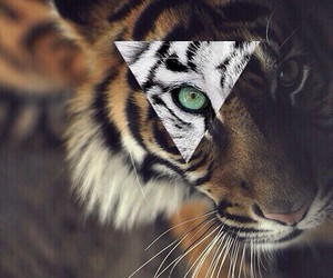 tiger, animal, and hipster image