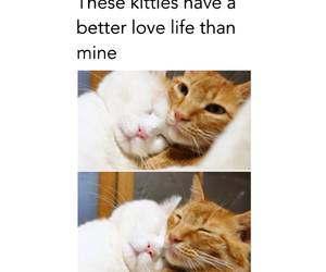 kitties image
