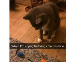 cat, crying, and sadness image