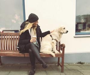 bench, dog, and iceland image