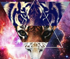 hipster, tiger, and galaxy image